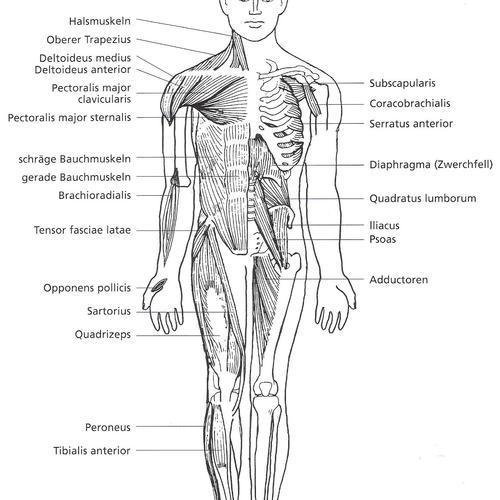 Muskelcoaching auf Sylt – Effizienter Muskelaufbau