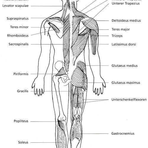 Muskelcoaching